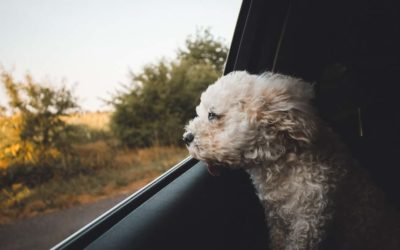 Pet Friendly Car Hire